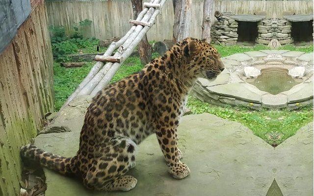 Visit Binghamton's Zoo at Ross Park; Another Hometown Treasure & Favorite!!!